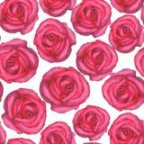 Sömlös modell för vattenfärg med rosa rosor på vit bakgrund Royaltyfri Foto