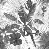 Sömlös modell för vektor, bakgrund med papegojan och tropiska växter vektor illustrationer