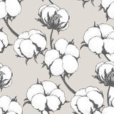 Sömlös modell för vektor med bomullsväxter Filialer med blommabakgrund Arkivbilder