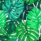 Sömlös modell för vektor med tropiska sidor Monstera sidatextur Blom- repeatable bakgrund för djungel stock illustrationer
