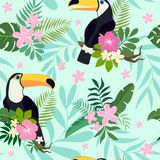 Sömlös modell för vektor med tukanfåglar på tropiska filialer med sidor och blommor Arkivfoton