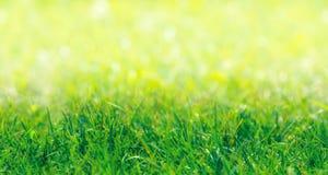 SÖMLÖS MODELL: Gräns för grönt gräs Royaltyfria Bilder