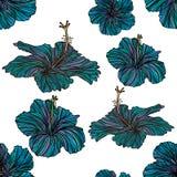 Sömlös modell med blåa hibiskusblommor Vektor Illustrationer