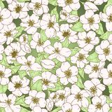 Sömlös modell med blommor för körsbärsröd blomning. Royaltyfri Bild