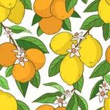 Sömlös modell med citronapelsiner Arkivfoton