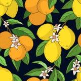 Sömlös modell med citronapelsiner vektor illustrationer