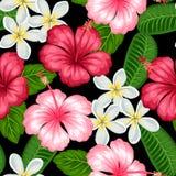 Sömlös modell med den tropiska blommahibiskusen och plumeria Bakgrund som göras, utan att fästa ihop maskeringen Enkelt att använ Arkivbild