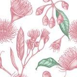 Sömlös modell med den utdragna pastellfärgade eukalyptusblomman för hand royaltyfri illustrationer