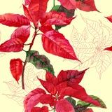 Sömlös modell med julstjärnan plant-04 Royaltyfria Foton
