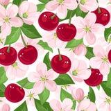 Sömlös modell med körsbärsröda bär och blommor. Fotografering för Bildbyråer