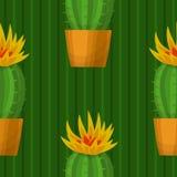 Sömlös modell med kaktuns Arkivbild