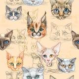 Sömlös modell med katter av olika avel vattenf?rg vektor vektor illustrationer