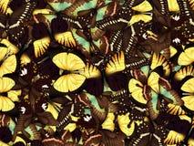 Sömlös modell med lotten av olika butterflys Royaltyfria Bilder