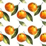 Sömlös modell med mandariner och sidor på vit bakgrund Teckningsmarkörer arkivfoton