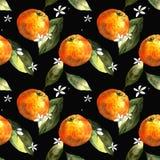 Sömlös modell med mandariner, sidor och blommor på svart bakgrund Teckningsmarkörer royaltyfri foto