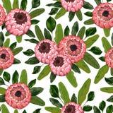 Sömlös modell med proteablommor och sidor Blom- bakgrund för dekorativ ferie vektor illustrationer