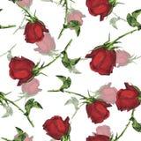 Sömlös modell med röda rosor för trädgård för flygillustration för näbb dekorativ bild dess paper stycksvalavattenfärg stock illustrationer
