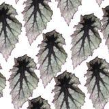 Sömlös modell med sidor av växten Fotografering för Bildbyråer