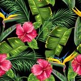 Sömlös modell med tropiska sidor och blommor Gömma i handflatan filialer, fågel av paradisblomman, hibiskus stock illustrationer