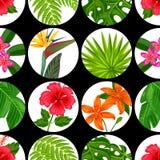 Sömlös modell med tropiska växter, sidor och blommor Bakgrund som göras, utan att fästa ihop maskeringen Enkelt att använda för Arkivbild