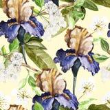 Sömlös modell med vattenfärgblommor iris Royaltyfria Bilder
