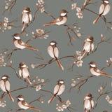 Sömlös modell med vattenfärgfåglar som sitter på filialer med blommor royaltyfri bild