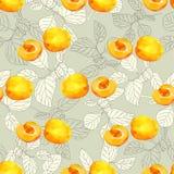 Sömlös modell med veicas och frukter av aprikosbär vektor illustrationer