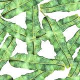 Sömlös modellbusksnår av palmbladbananen stock illustrationer