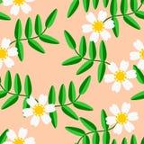 Sömlös modellvektor av vita blommor och gräsplansidor Arkivfoton