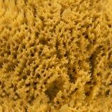 Sömlös naturlig havssvamp HD Arkivbilder