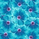 Sömlös oändlig blom- bakgrund för design och printing Bakgrund av naturliga blått-turkos Violets Royaltyfri Fotografi
