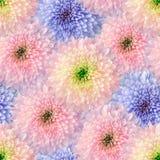 Sömlös oändlig blom- bakgrund för design och printing Bakgrund av naturliga krysantemum Arkivfoto