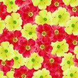 Sömlös oändlig blom- bakgrund för design och printing Bakgrund av naturliga röda och gula Violets Royaltyfri Bild