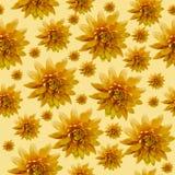 Sömlös oändlig orange blom- bakgrund för design och printing Bakgrund av naturliga krysantemum Royaltyfria Foton