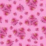 Sömlös oändlig rosa blom- bakgrund för design och printing Bakgrund av naturliga krysantemum Royaltyfri Foto
