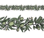 Sömlös olivgrön gräns i färg vektor illustrationer