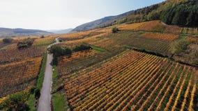 Sömlös panorama av höstRiquewihr vingårdar, Alsace, Frankrike stock video