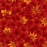 Sömlös röd lönnlövmodell Royaltyfri Foto
