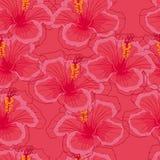 Sömlös rosa bakgrund med rosa hibiskusblommor Royaltyfri Foto