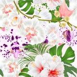 Sömlös stam för tropisk växt för Phalaenopsis för blommor för texturfilialorkidér och botanisk vektor för knoppar och vit hibisku royaltyfri illustrationer