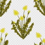Sömlös stilfull modell med maskrosor dekorativt blom- f?r bakgrund vektor illustrationer