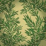 Sömlös tappningbakgrund med gröna rosmarin Arkivbild