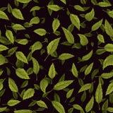 Sömlös textur av det gröna bladet på svart bakgrund Fotografering för Bildbyråer