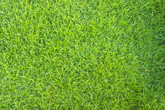Sömlös textur för grönt gräs Arkivfoto