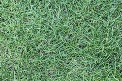 Sömlös textur för grönt gräs Royaltyfria Bilder