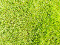 Sömlös textur för grönt gräs Arkivfoton
