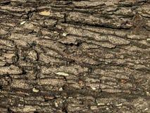 Sömlös textur för trädskäll av bakgrund arkivfoto