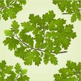 Sömlös texturfilial av eken med vektorn för naturlig bakgrund för ekollonar Arkivbilder