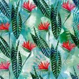 Sömlös tropisk blom- modell Ljusa röda blommor, gräsplansidor på bakgrund för blå gräsplan Arkivfoton