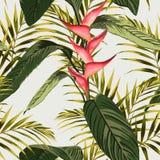 Sömlös tropisk modell för vektor, vändkretslövverk, med palmblad, fågel av paradisblomman, heliconia i blom stock illustrationer